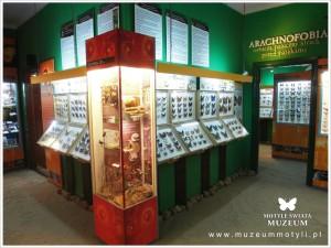Muzeum Motyli Władysławowo - źródło: www.muzeummotyli.pl